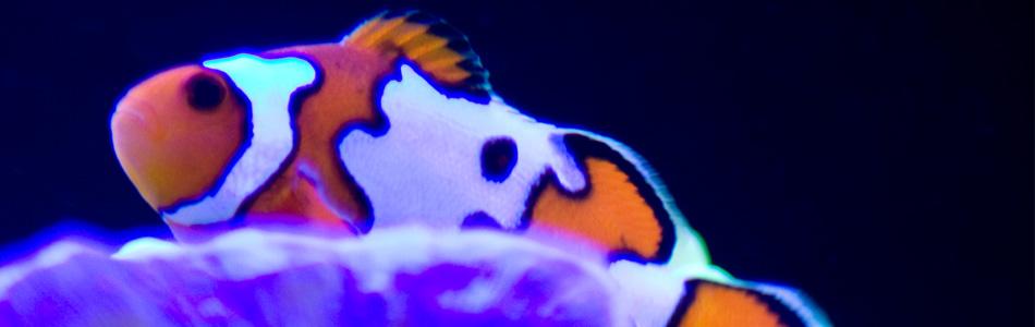Saltwater Fish Springfield MO